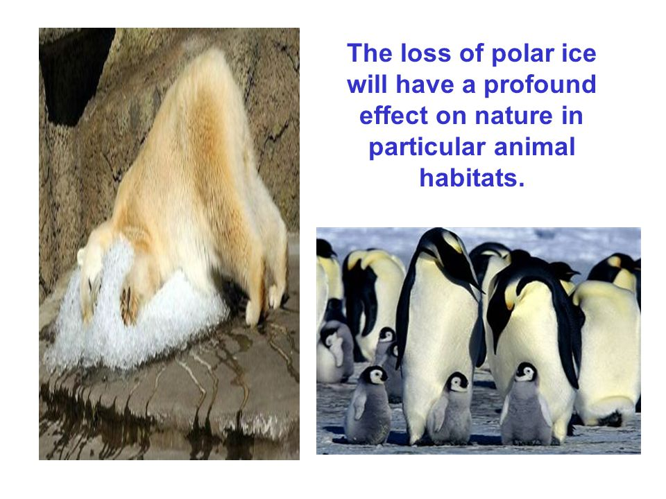 The loss of polar ice will have a profound effect on nature in particular animal habitats.