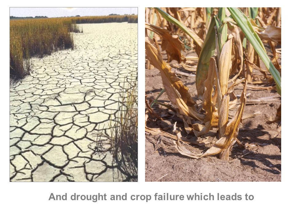 And drought and crop failure which leads to