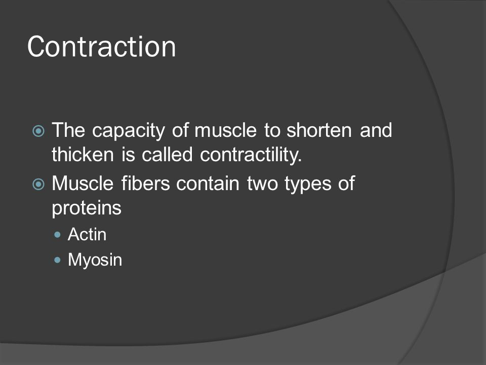 Contraction The capacity of muscle to shorten and thicken is called contractility. Muscle fibers contain two types of proteins.