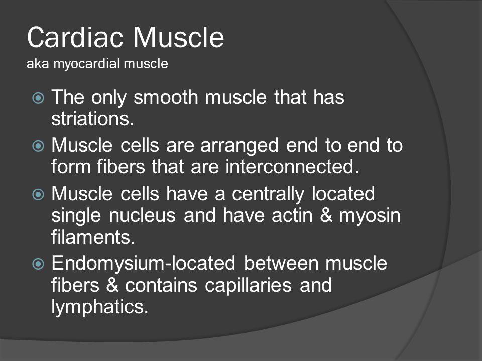 Cardiac Muscle aka myocardial muscle
