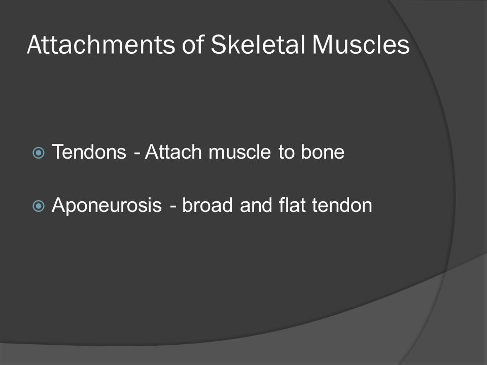 Attachments of Skeletal Muscles