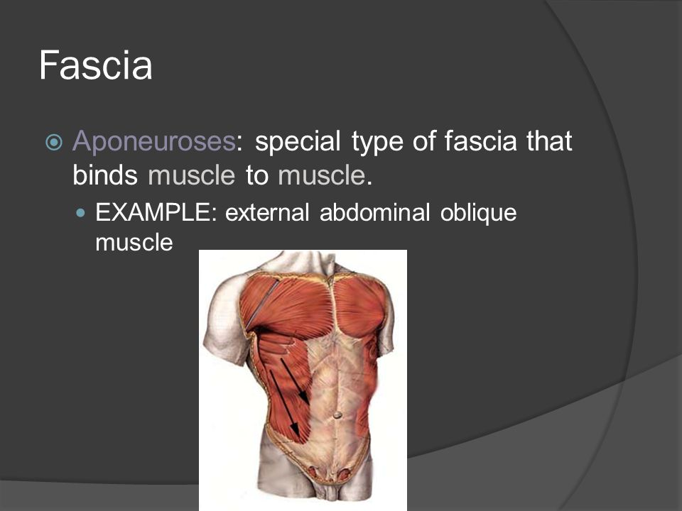 Fascia Aponeuroses: special type of fascia that binds muscle to muscle.