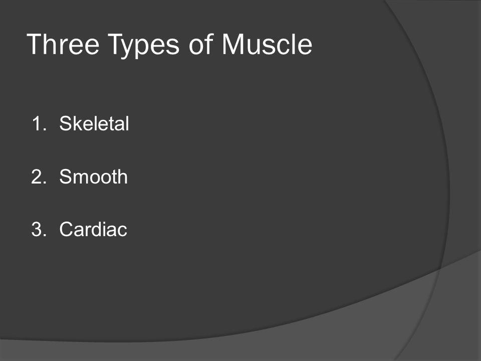 Three Types of Muscle 1. Skeletal 2. Smooth 3. Cardiac