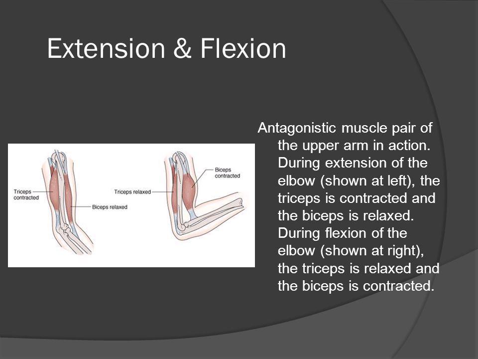 Extension & Flexion