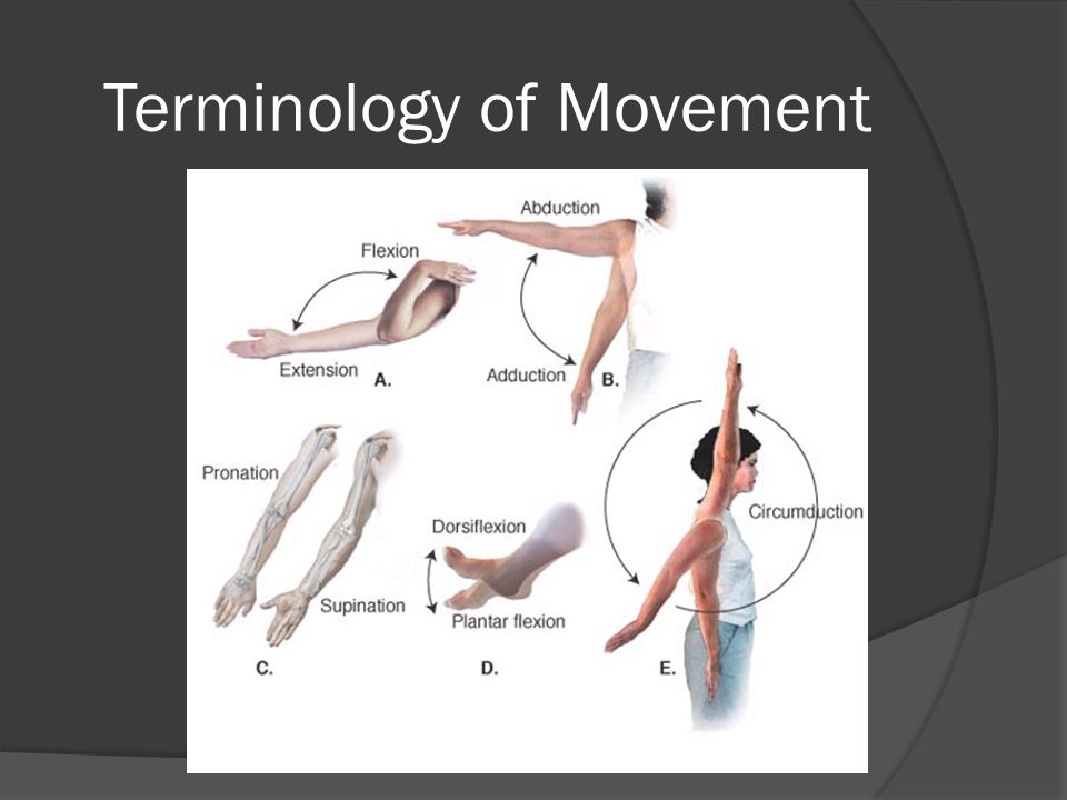 Terminology of Movement