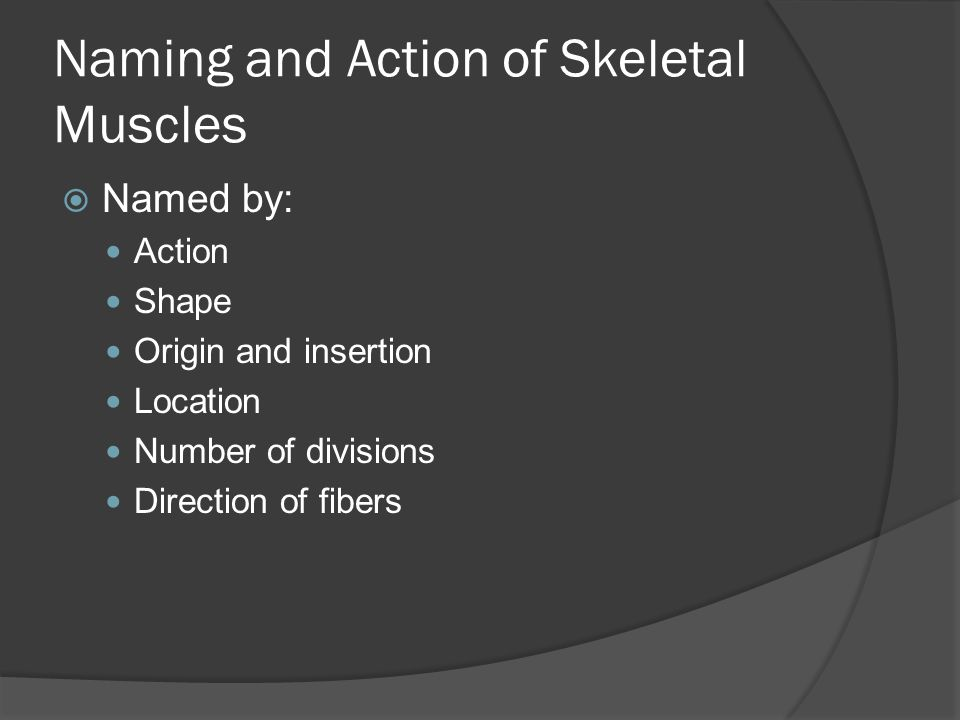 Naming and Action of Skeletal Muscles
