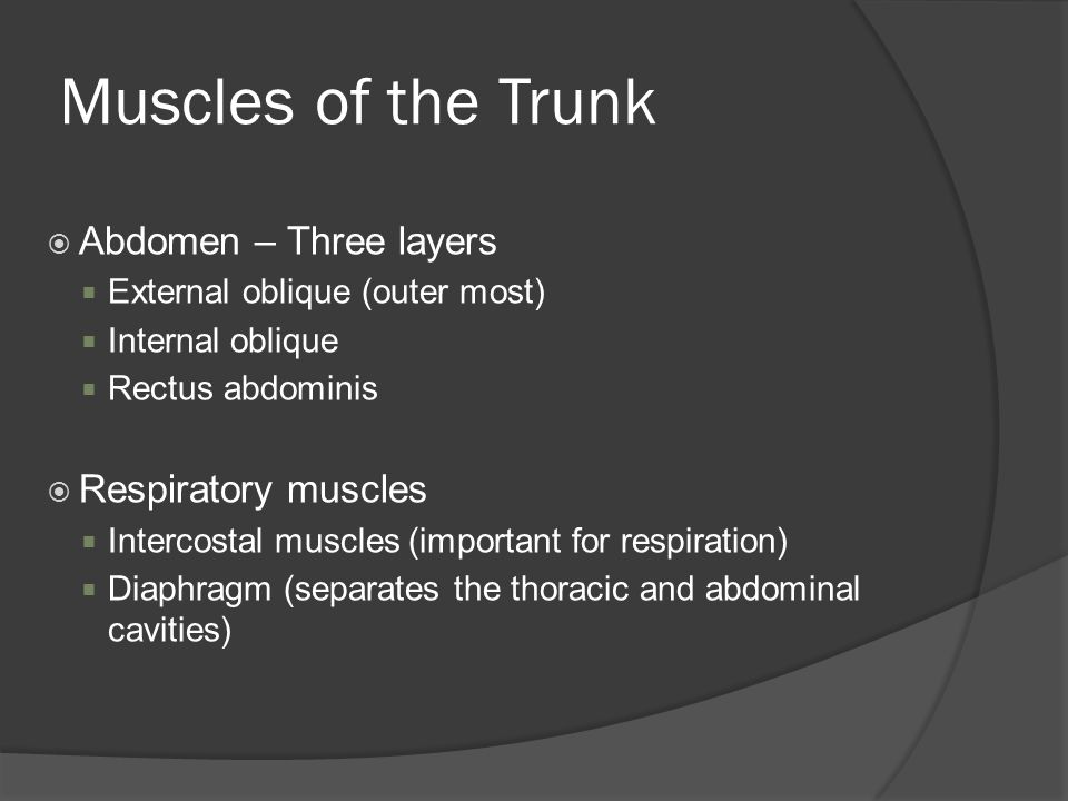 Muscles of the Trunk Abdomen – Three layers Respiratory muscles