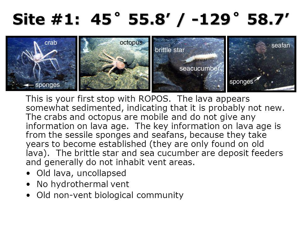 Site #1: 45˚ 55.8' / -129˚ 58.7'
