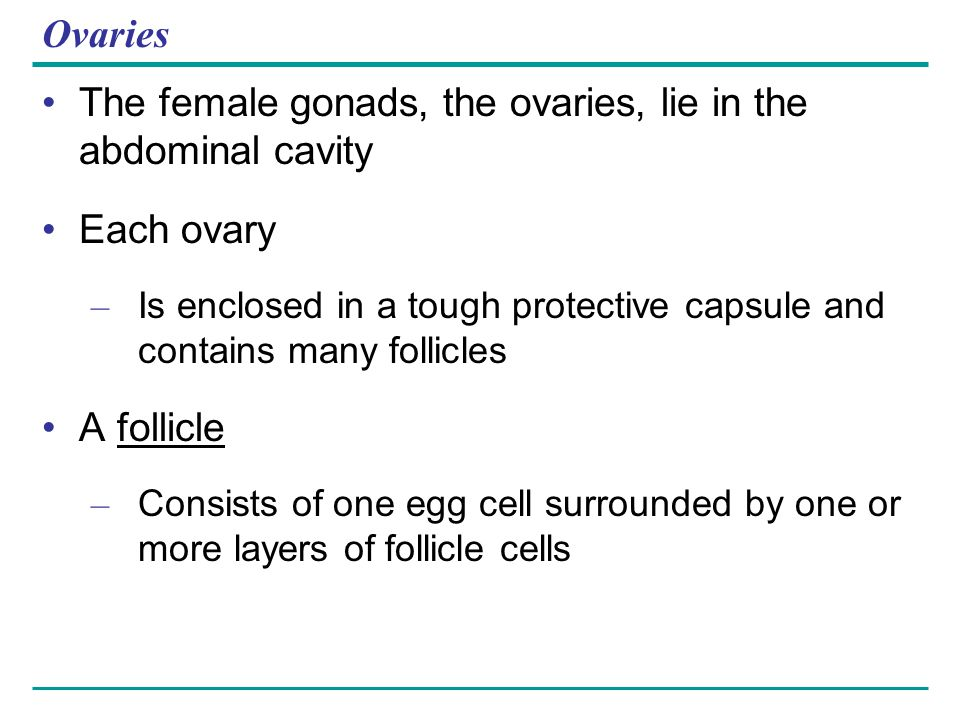 The female gonads, the ovaries, lie in the abdominal cavity Each ovary