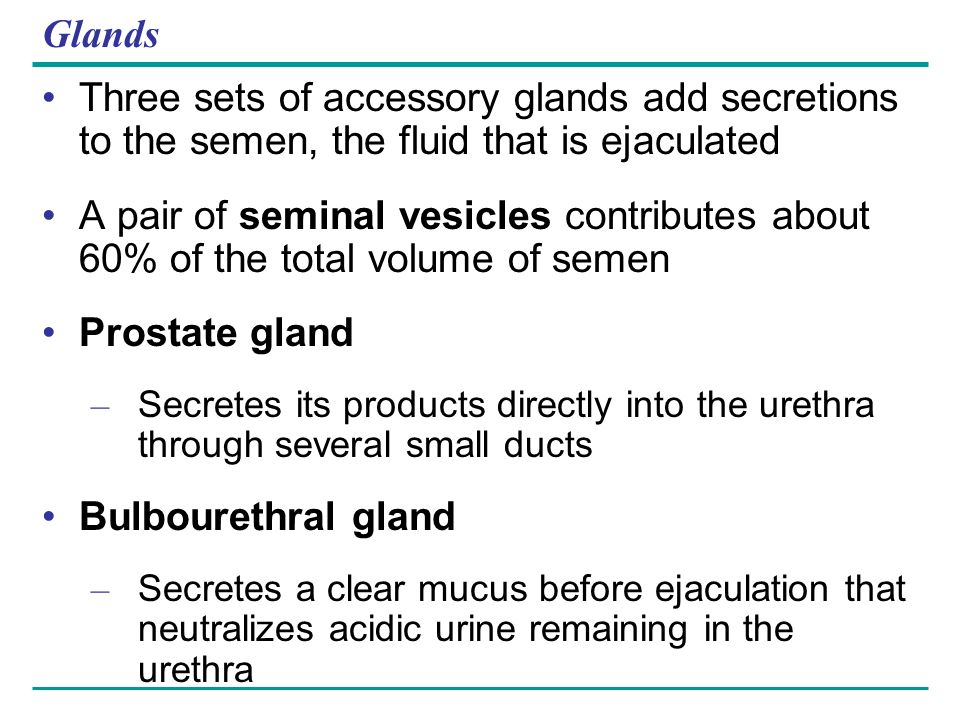 Glands Three sets of accessory glands add secretions to the semen, the fluid that is ejaculated.