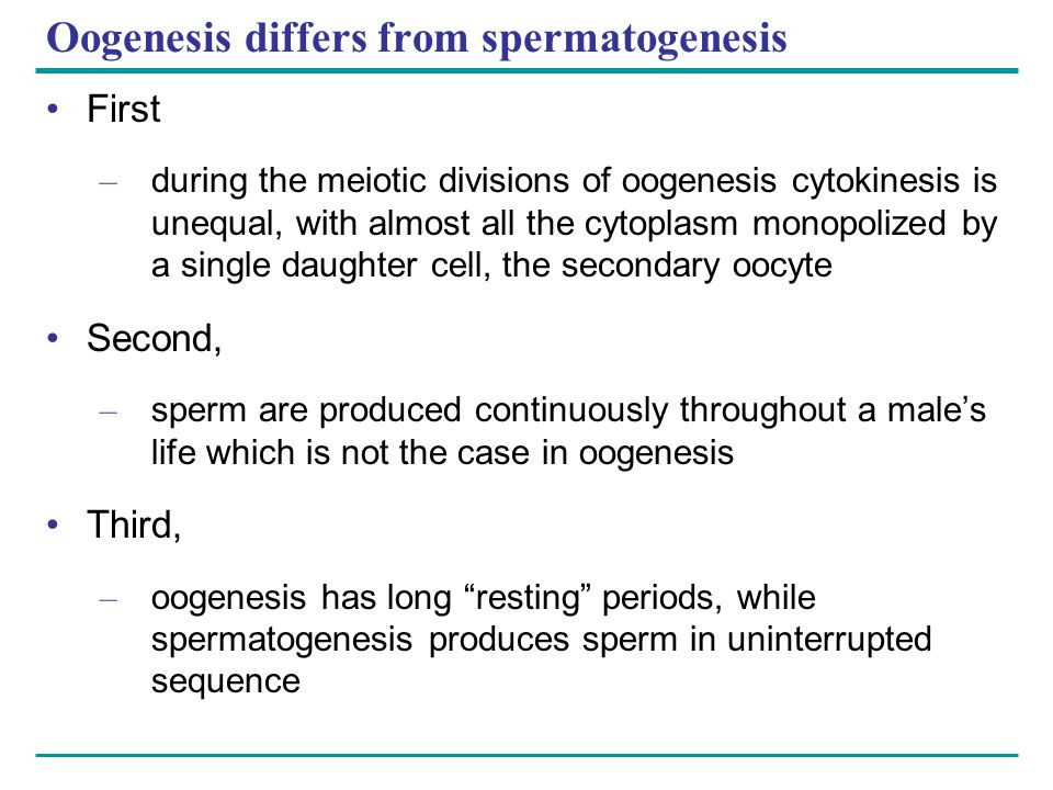 Oogenesis differs from spermatogenesis