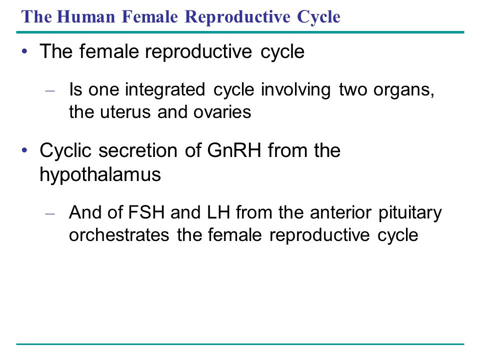 The Human Female Reproductive Cycle