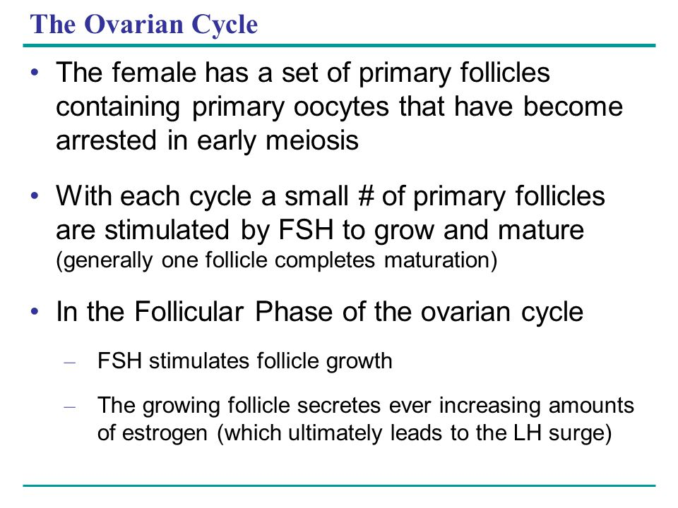 In the Follicular Phase of the ovarian cycle