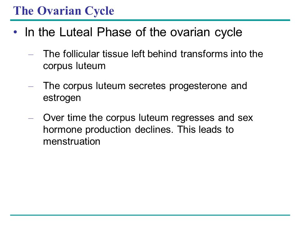 In the Luteal Phase of the ovarian cycle
