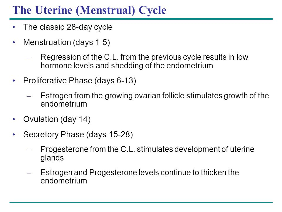 The Uterine (Menstrual) Cycle