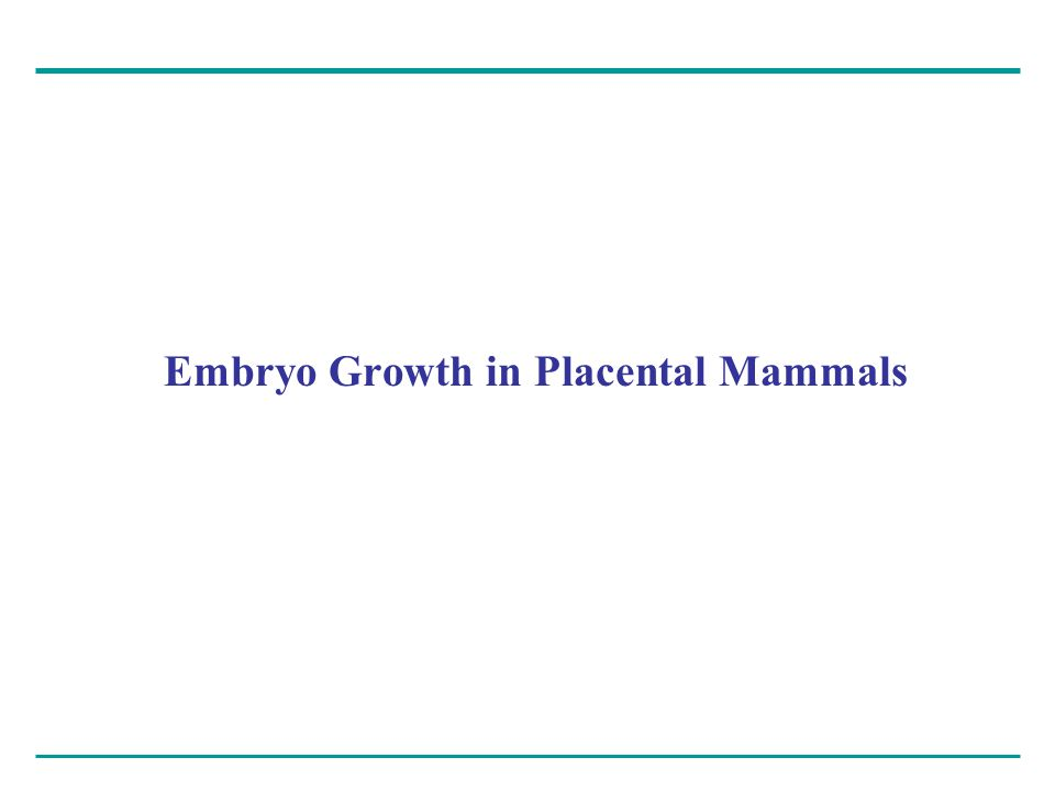 Embryo Growth in Placental Mammals