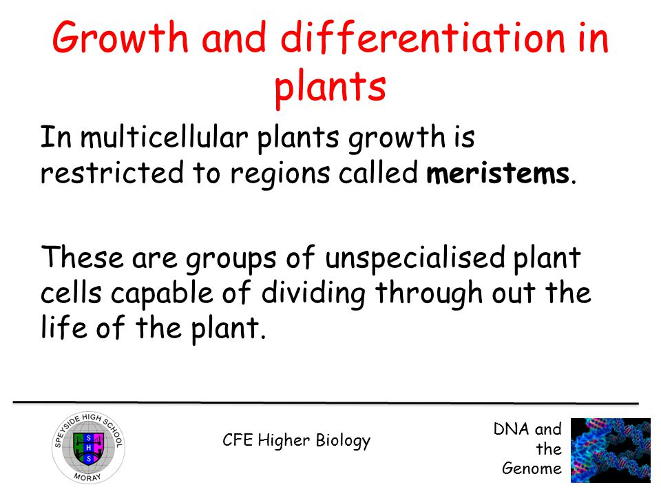Growth and differentiation in plants