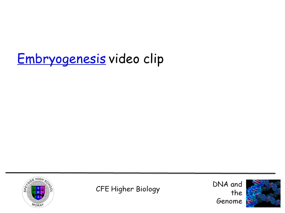 Embryogenesis video clip