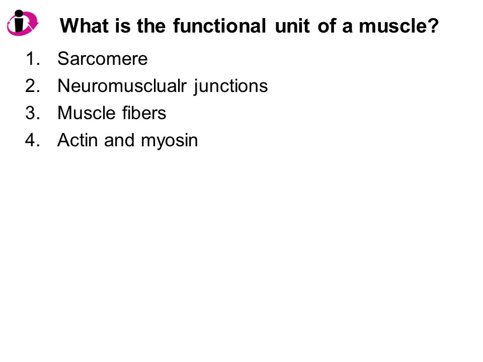 What is the functional unit of a muscle