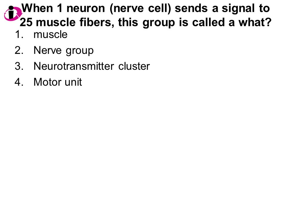 When 1 neuron (nerve cell) sends a signal to 25 muscle fibers, this group is called a what