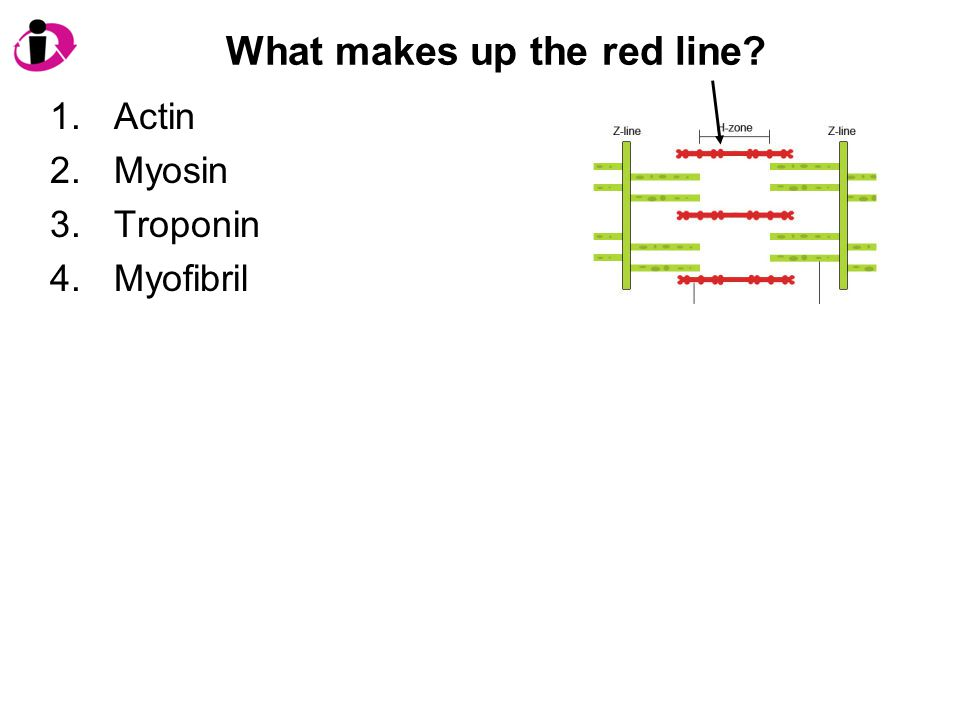 What makes up the red line