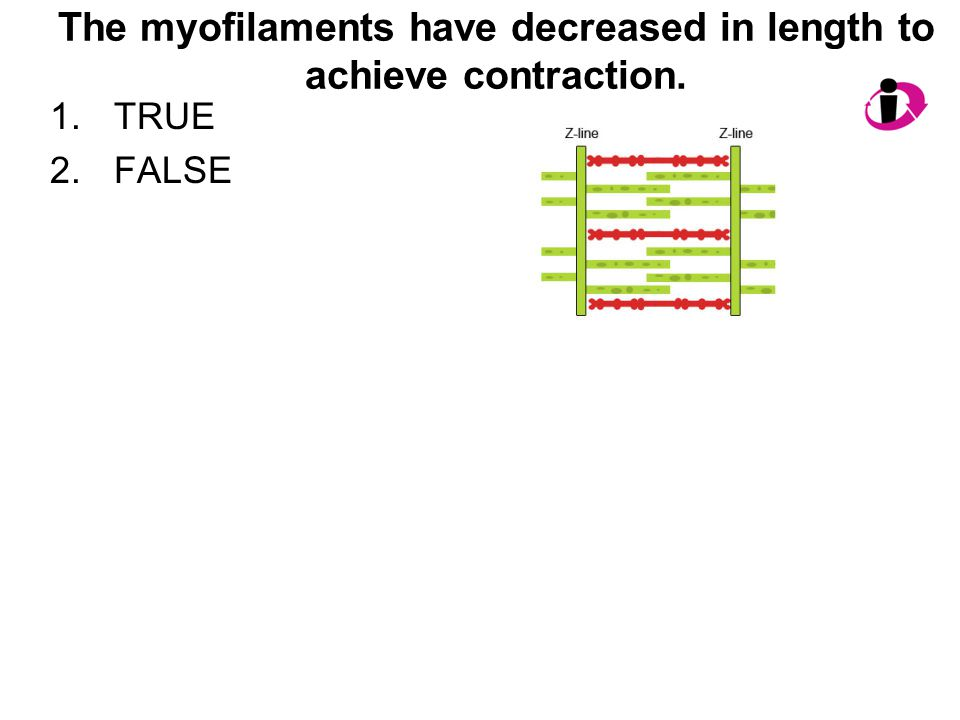 The myofilaments have decreased in length to achieve contraction.