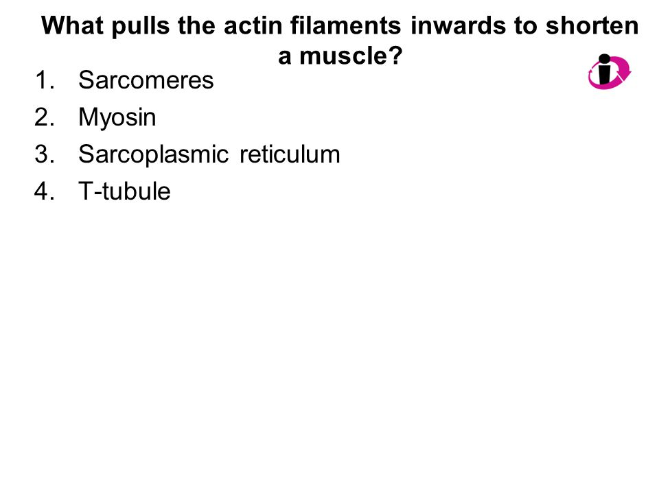 What pulls the actin filaments inwards to shorten a muscle