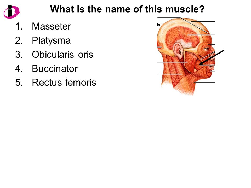 What is the name of this muscle