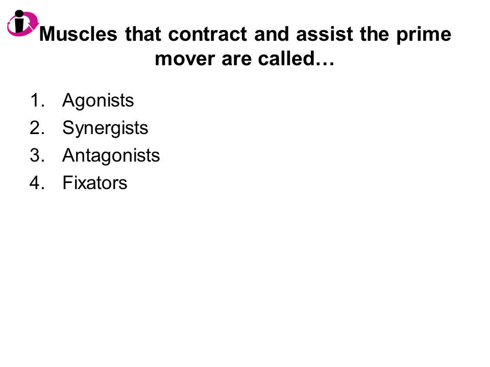 Muscles that contract and assist the prime mover are called…