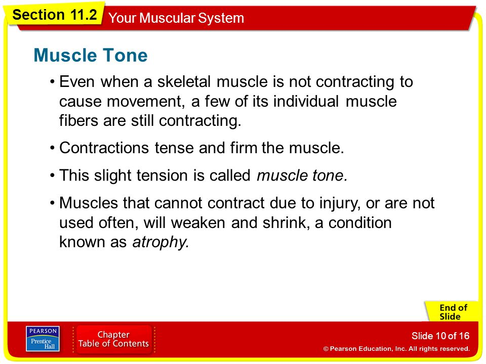 Muscle Tone Even when a skeletal muscle is not contracting to cause movement, a few of its individual muscle fibers are still contracting.