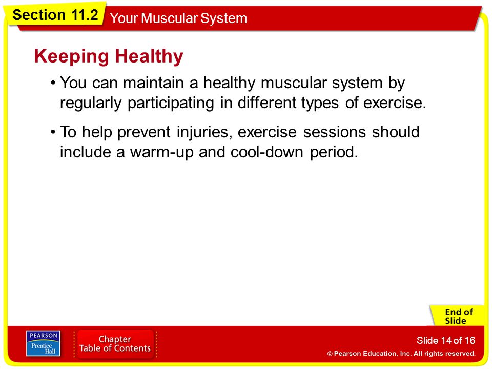 Keeping Healthy You can maintain a healthy muscular system by regularly participating in different types of exercise.