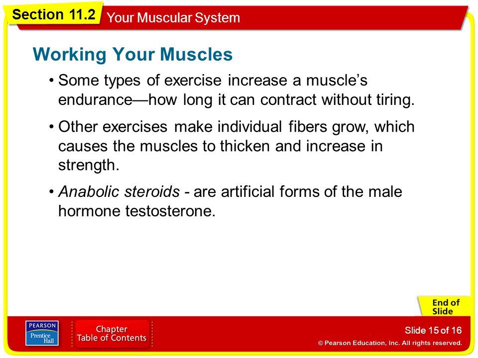 Working Your Muscles Some types of exercise increase a muscle's endurance—how long it can contract without tiring.