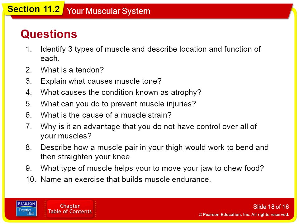 Questions Identify 3 types of muscle and describe location and function of each. What is a tendon