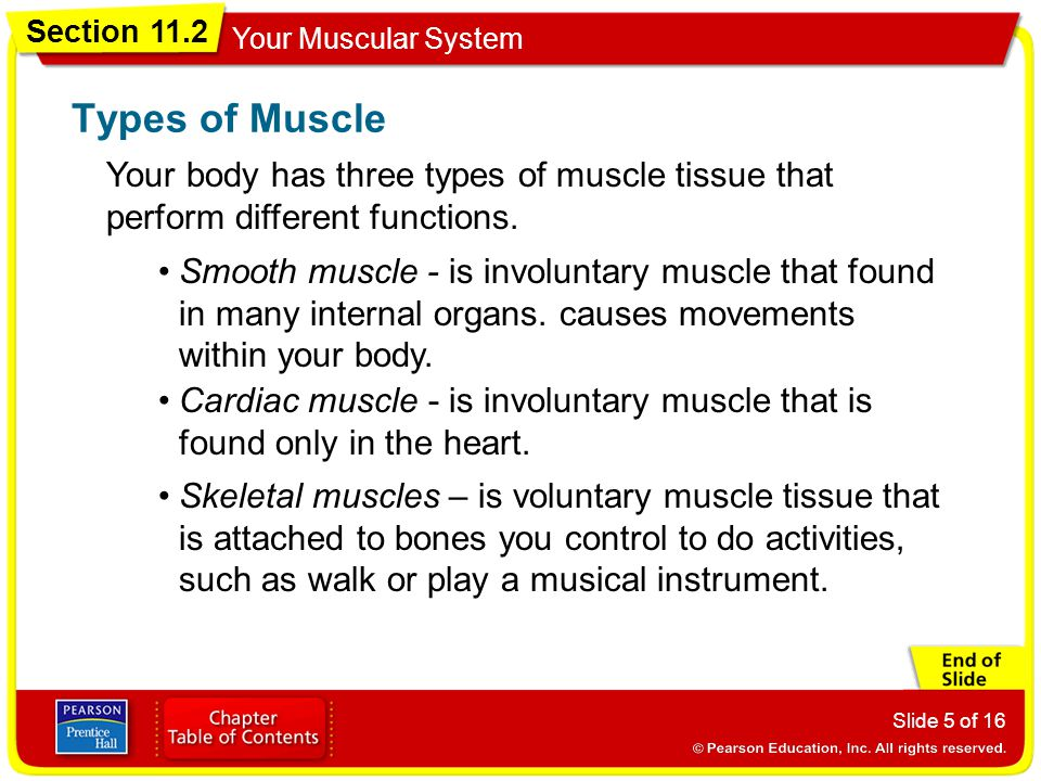 Types of Muscle Your body has three types of muscle tissue that perform different functions.