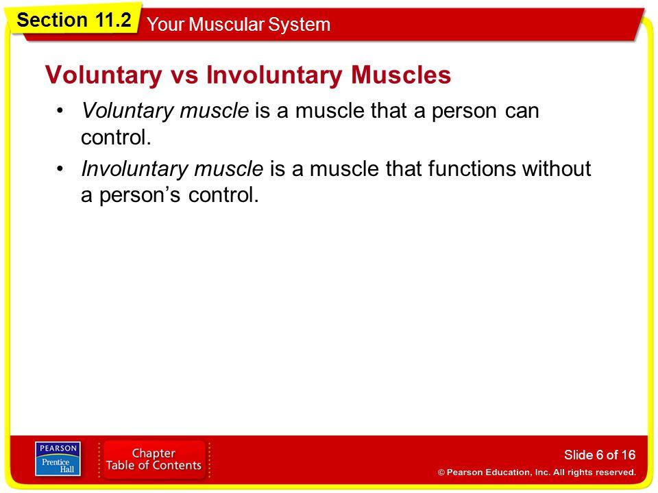Voluntary vs Involuntary Muscles