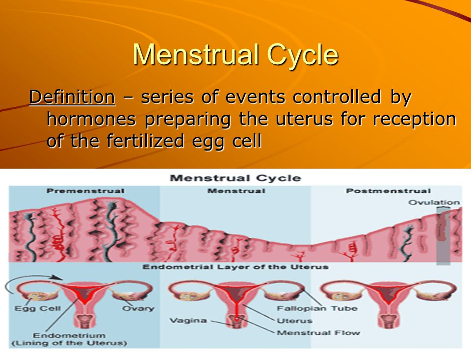 Menstrual Cycle Definition – series of events controlled by hormones preparing the uterus for reception of the fertilized egg cell.