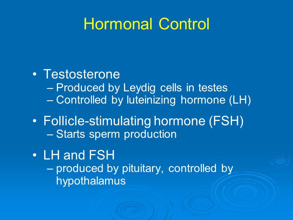 Hormonal Control Testosterone Follicle-stimulating hormone (FSH)