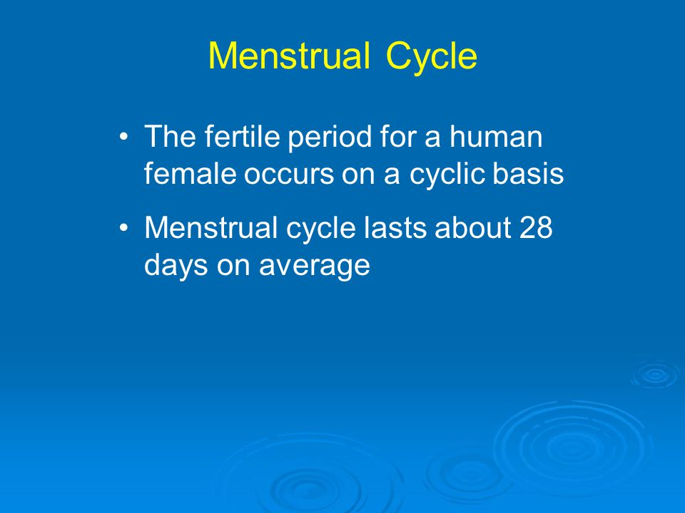 Menstrual Cycle The fertile period for a human female occurs on a cyclic basis.