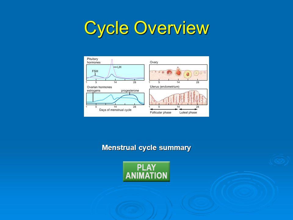 Menstrual cycle summary