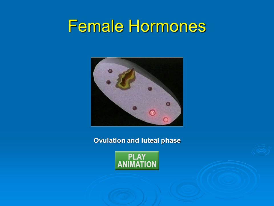 Ovulation and luteal phase