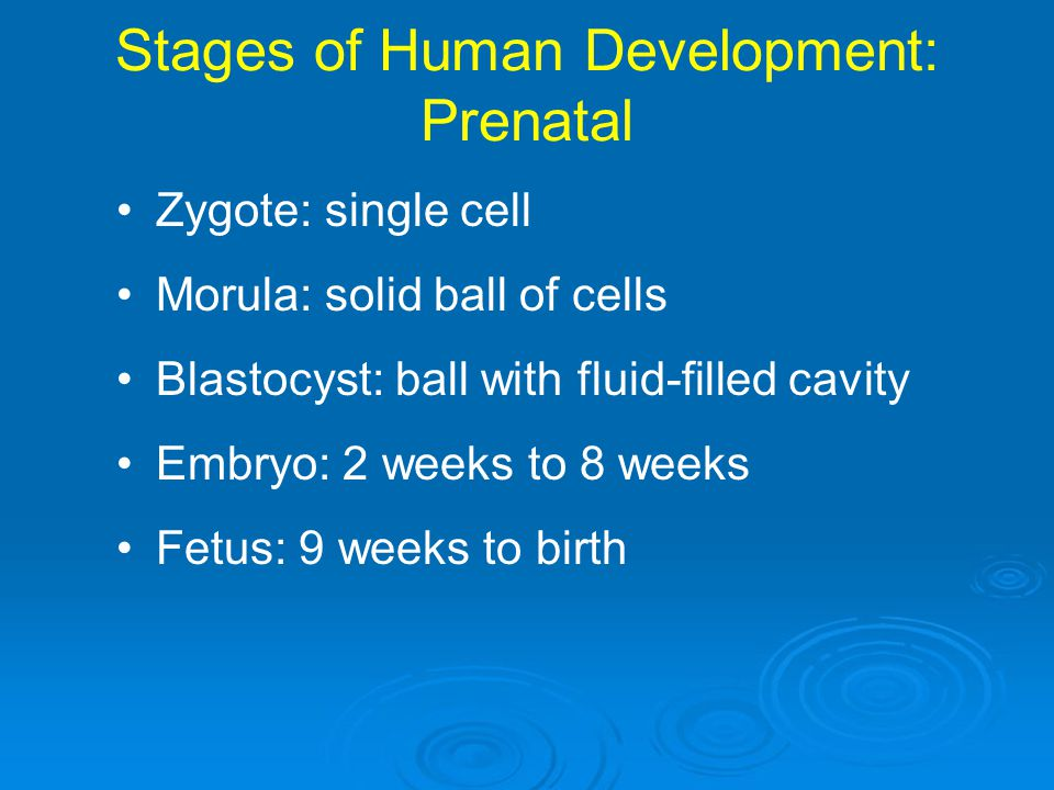 Stages of Human Development: Prenatal