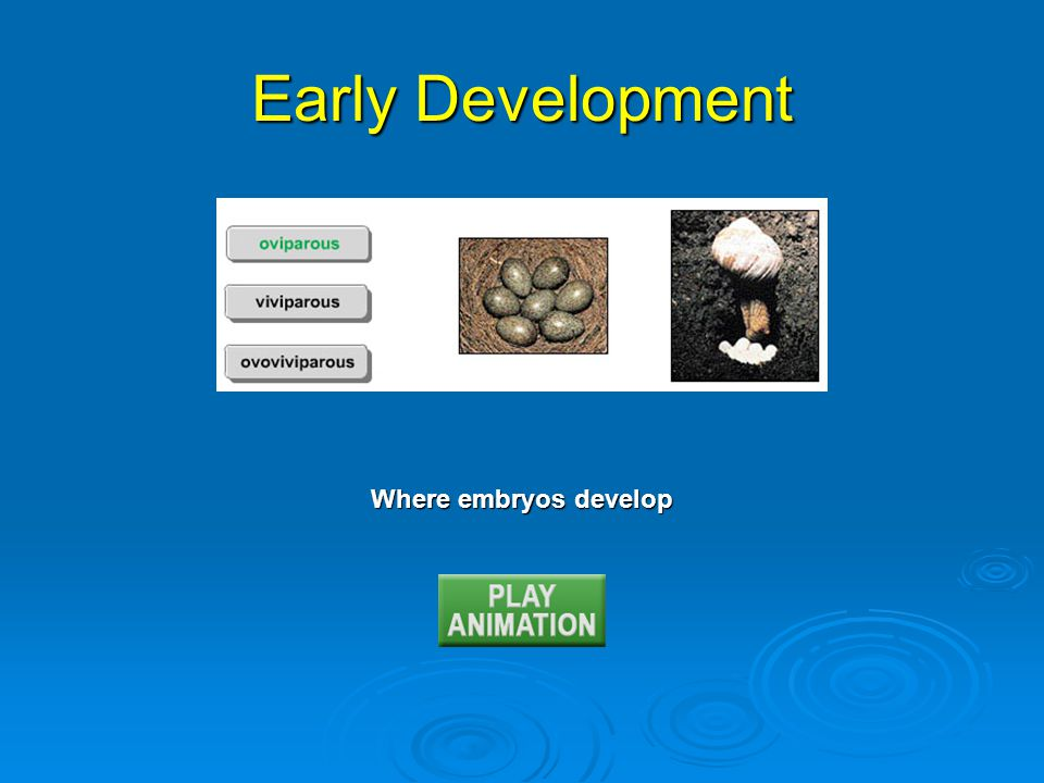 Early Development Where embryos develop