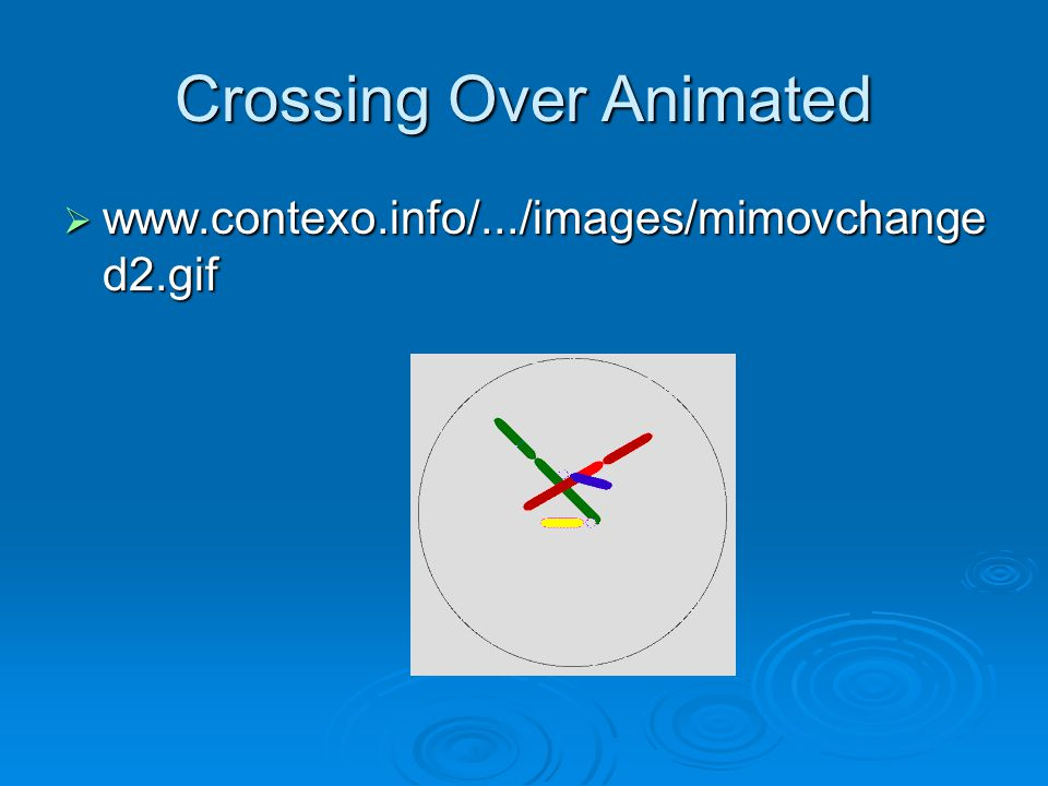 Crossing Over Animated