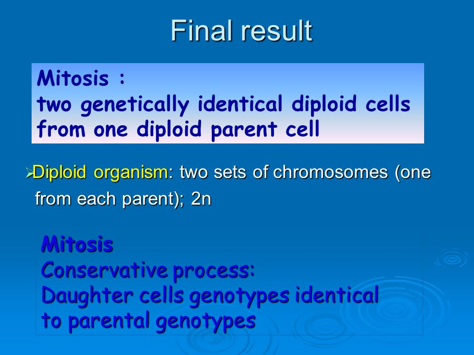 Final result Mitosis : two genetically identical diploid cells