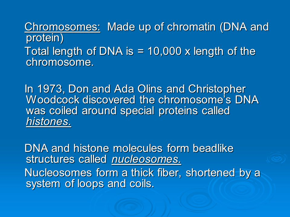 Chromosomes: Made up of chromatin (DNA and protein)