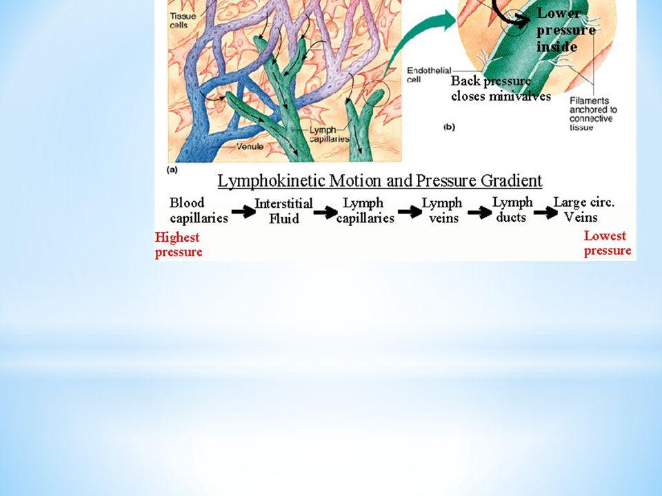 Lymph composition