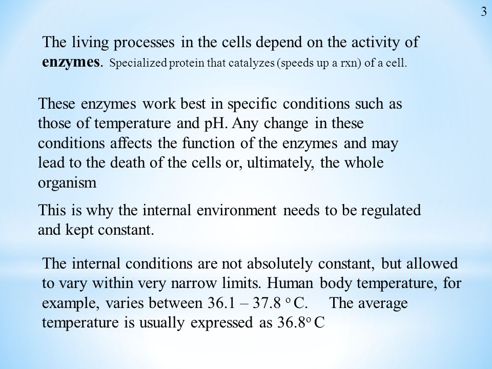 3 The living processes in the cells depend on the activity of enzymes. Specialized protein that catalyzes (speeds up a rxn) of a cell.