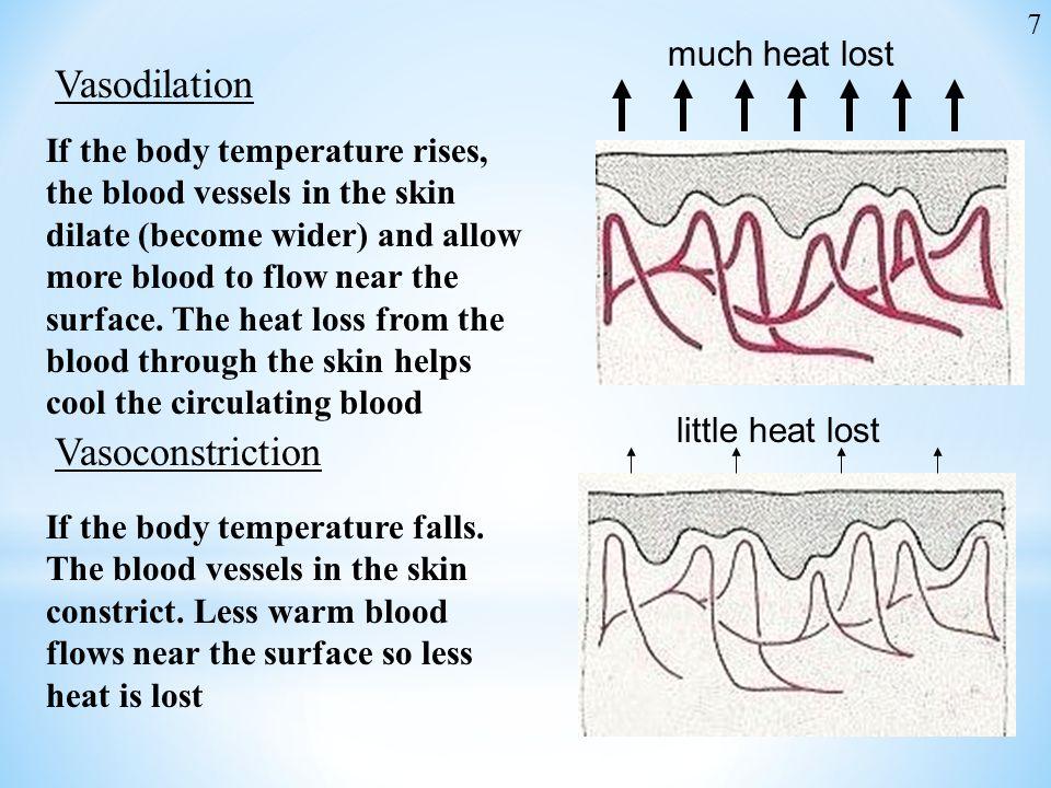 Vasodilation Vasoconstriction much heat lost