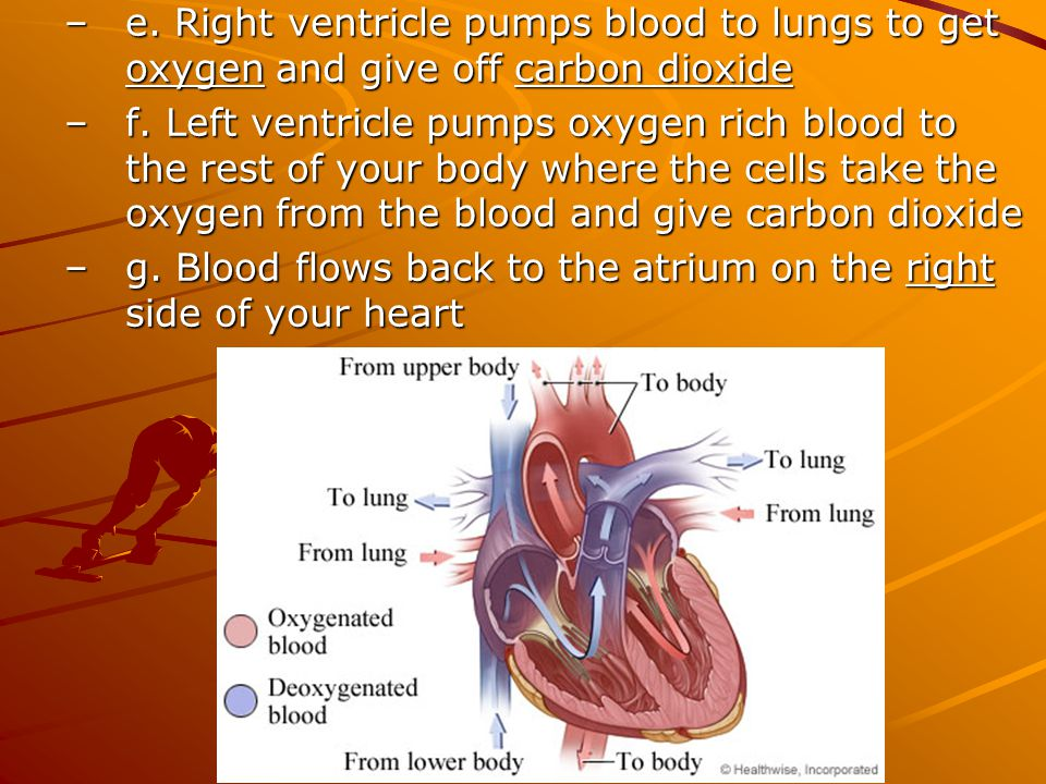 e. Right ventricle pumps blood to lungs to get oxygen and give off carbon dioxide