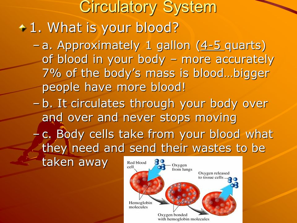Circulatory System 1. What is your blood
